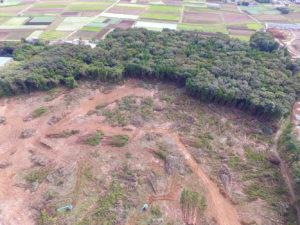 大規模伐採