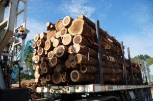 伐採と運び出し作業