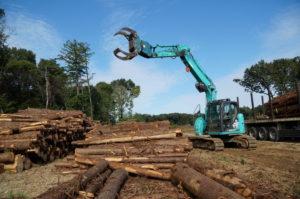 伐採現場・安全第一