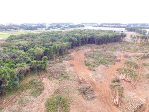 茨城県古河市国道新4号線沿い伐採現場